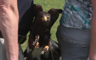 Falconry country pursuits